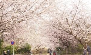 3月の伊豆高原