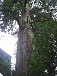 樹齢1200年?の大杉。パワーがすごい。